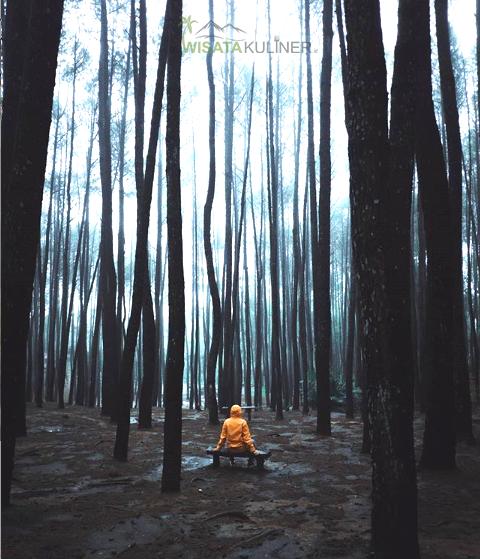Wisata Hutan Pinus Mangunan: Lokasi, Daya Tarik, Fasilitas & Harga Tiket