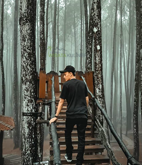 Rute Menuju Hutan Pinus Mangunan
