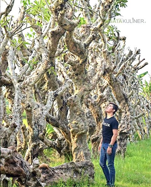 Rute ke Taman Kamboja Klaten